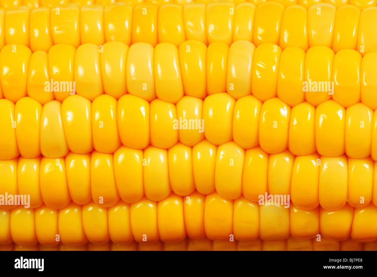 Extreme close up de texture des épis de maïs jaune Photo Stock