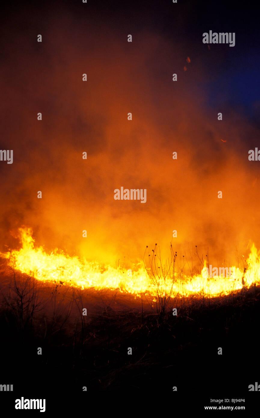 Une prairie burn qui fait partie d'un projet de restauration des prairies de l'Illinois. Photo Stock