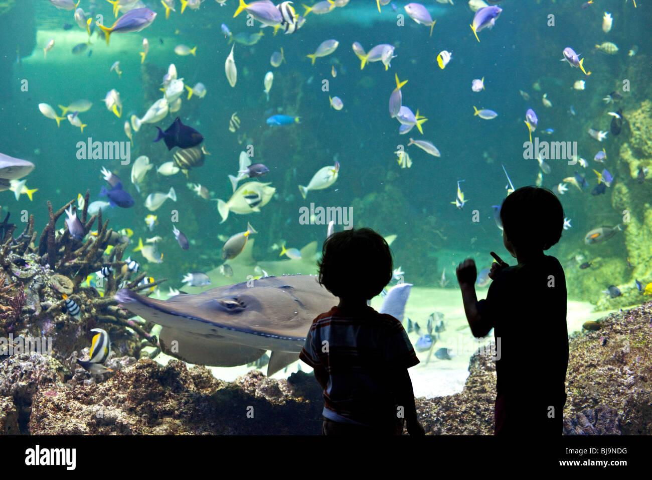 Les enfants regarder les requins dans l'Aquarium de Sydney, Australie Photo Stock