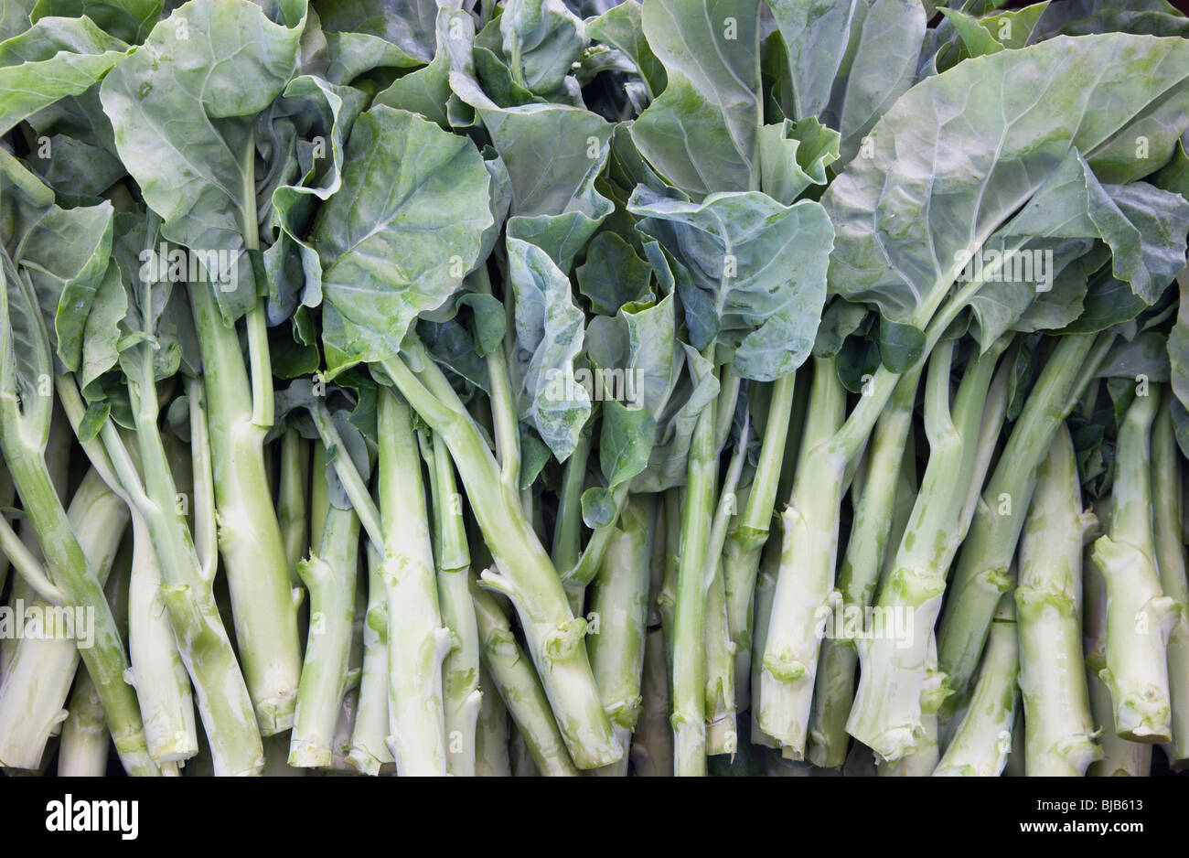 Gai Lan, légumes chinois 'Brassica oleracea' . Photo Stock