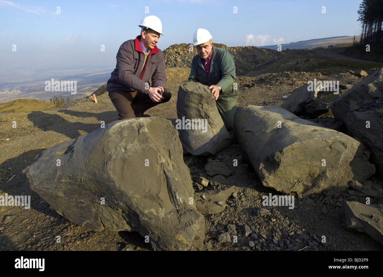 Les géologues d'examiner certaines des 300 millions d'années les arbres fossilisés préservés Photo Stock