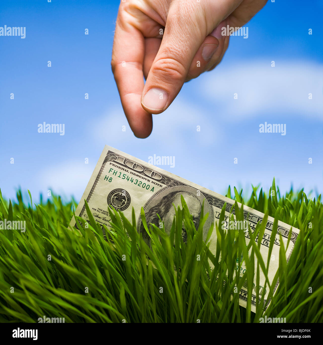 100 dollars dans l'herbe. Photo Stock