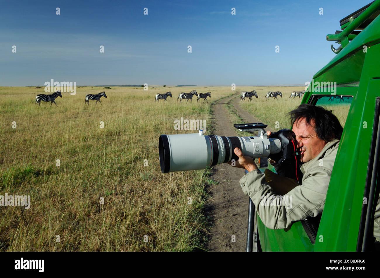 Tony Crocetta photographe animalier français professionnel avec prise de vue téléobjectif zèbres. Photo Stock
