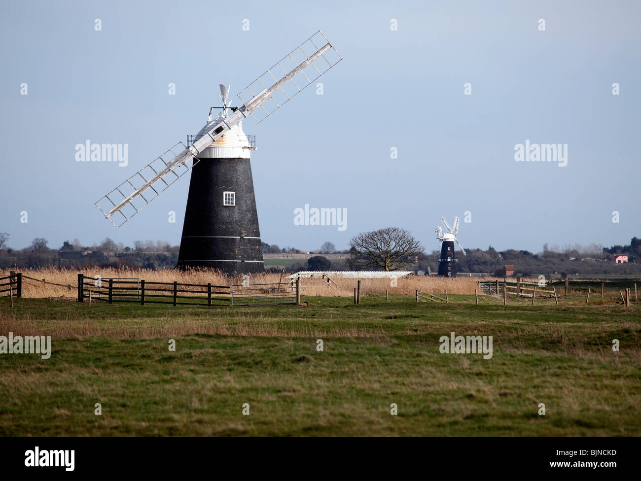 Le mouton et l'usine de drainage Drainage Bras Berney Mill, Marais Halvergate, Norfolk Broads Photo Stock