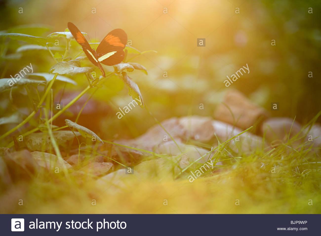 Papillon sur plant Photo Stock