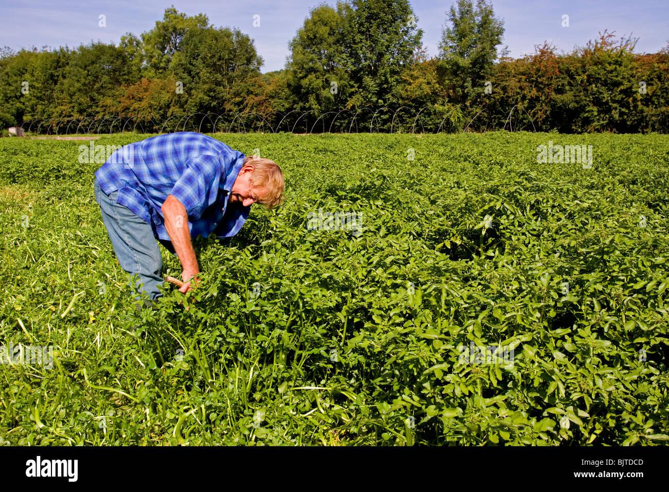 L'agriculture traditionnelle de la vallée d'Échecs cresson Chilterns Hertfordshire Photo Stock