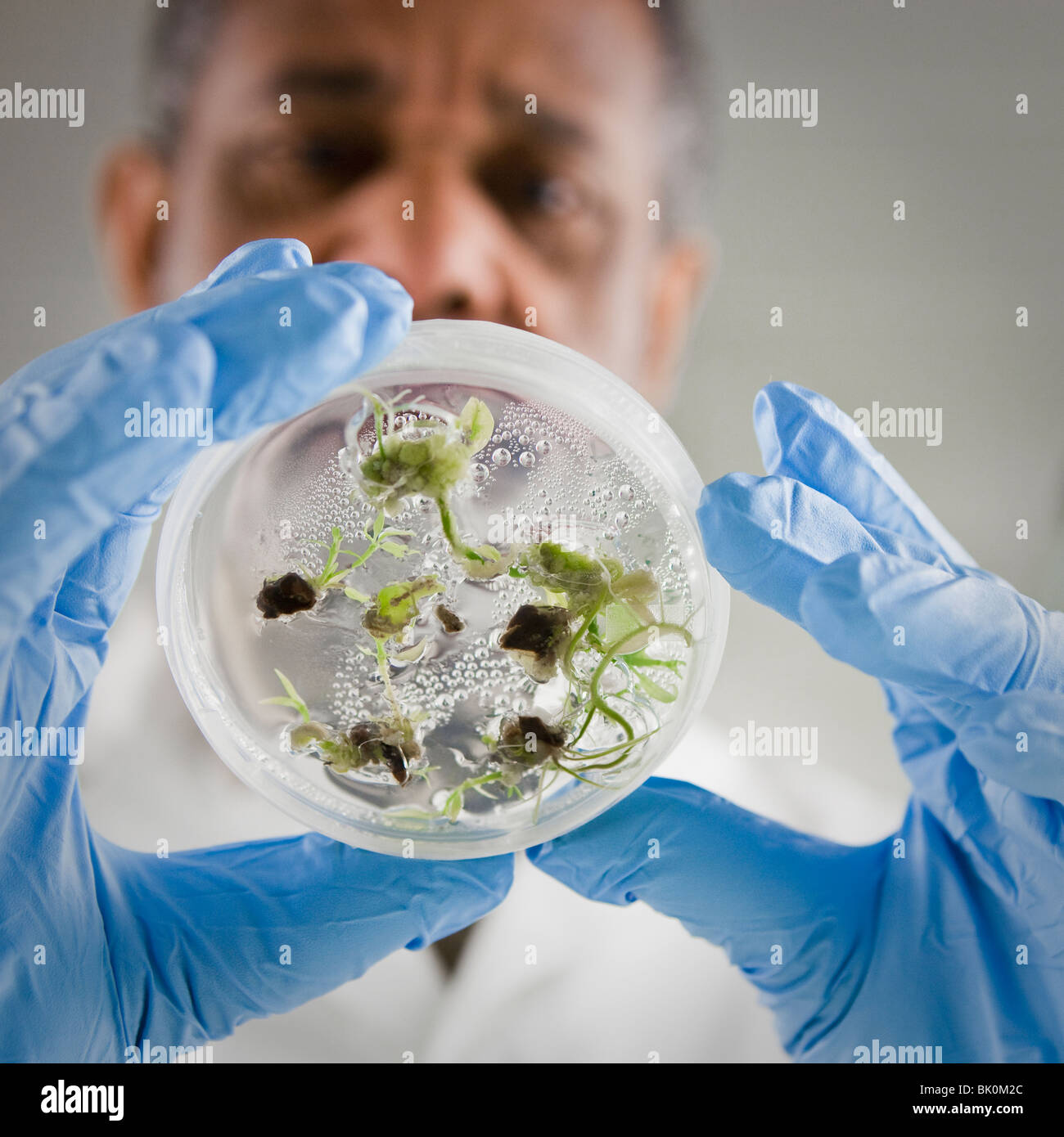 African American Scientist holding specimen in petri dish Banque D'Images