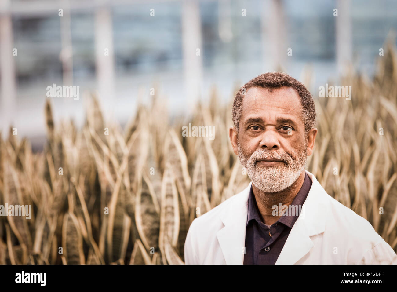African American Scientist working in greenhouse Banque D'Images