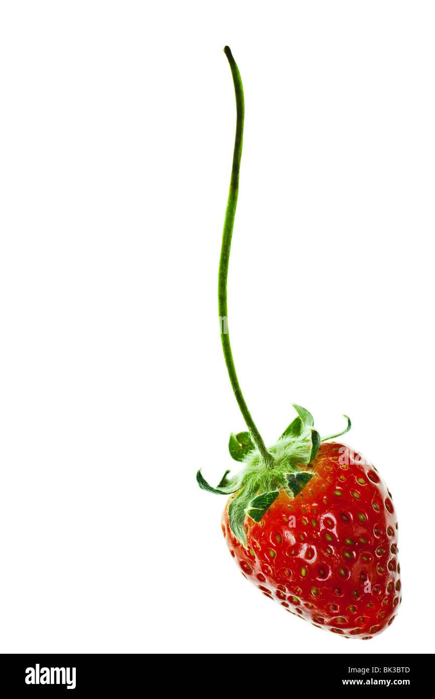 Fraise rouge mûr avec tige isolé sur fond blanc Photo Stock