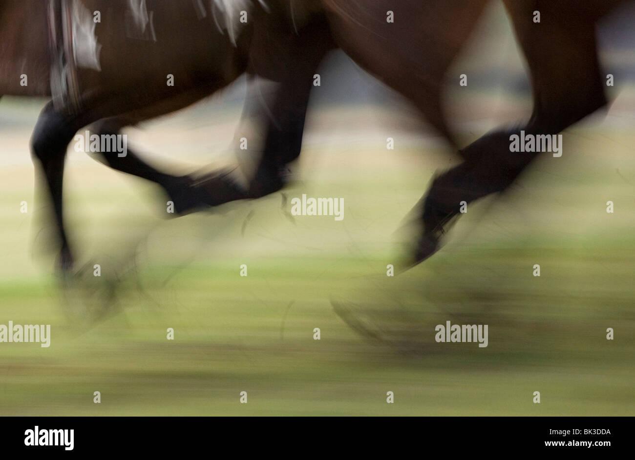 Les sabots des chevaux dans une course Photo Stock