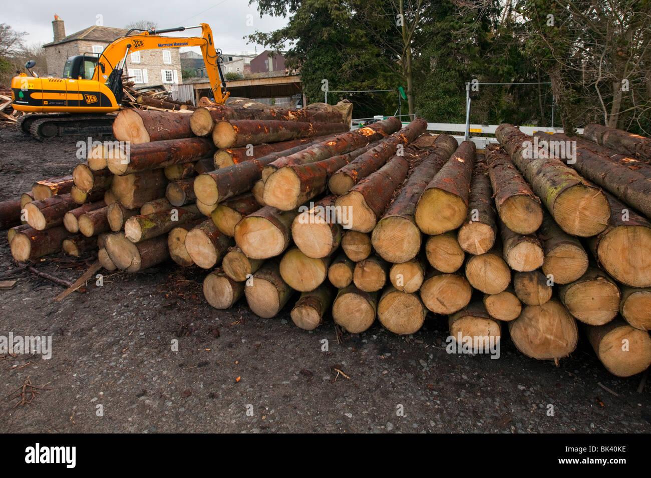 La déforestation, les arbres sont abattus pour faire place à des terres agricoles et de nouvelles routes Photo Stock