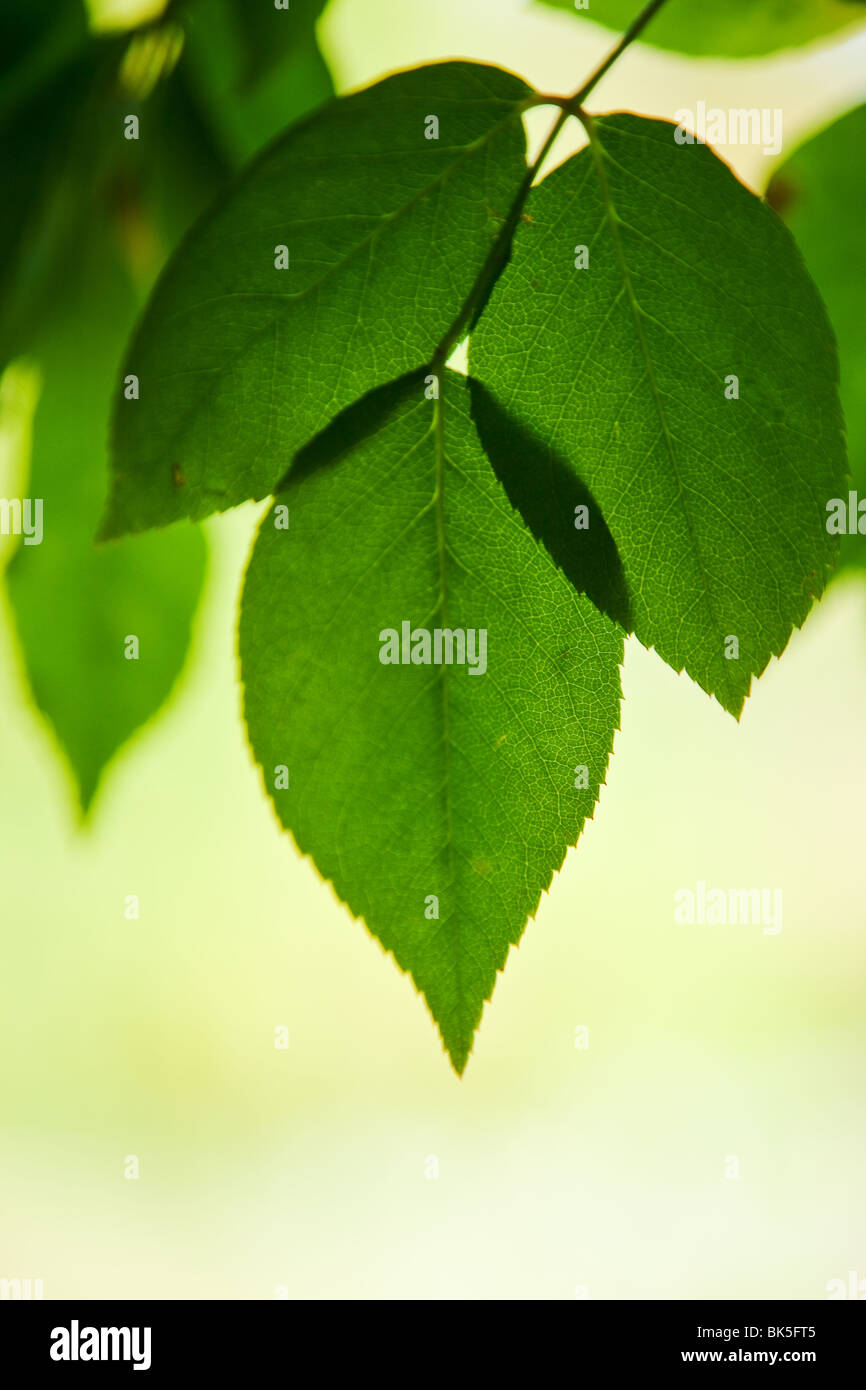 Fond vert feuilles Photo Stock