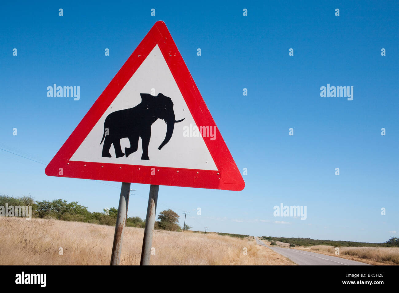 Elephant road sign, Damaraland, région de Kunene, Namibie, Afrique Banque D'Images