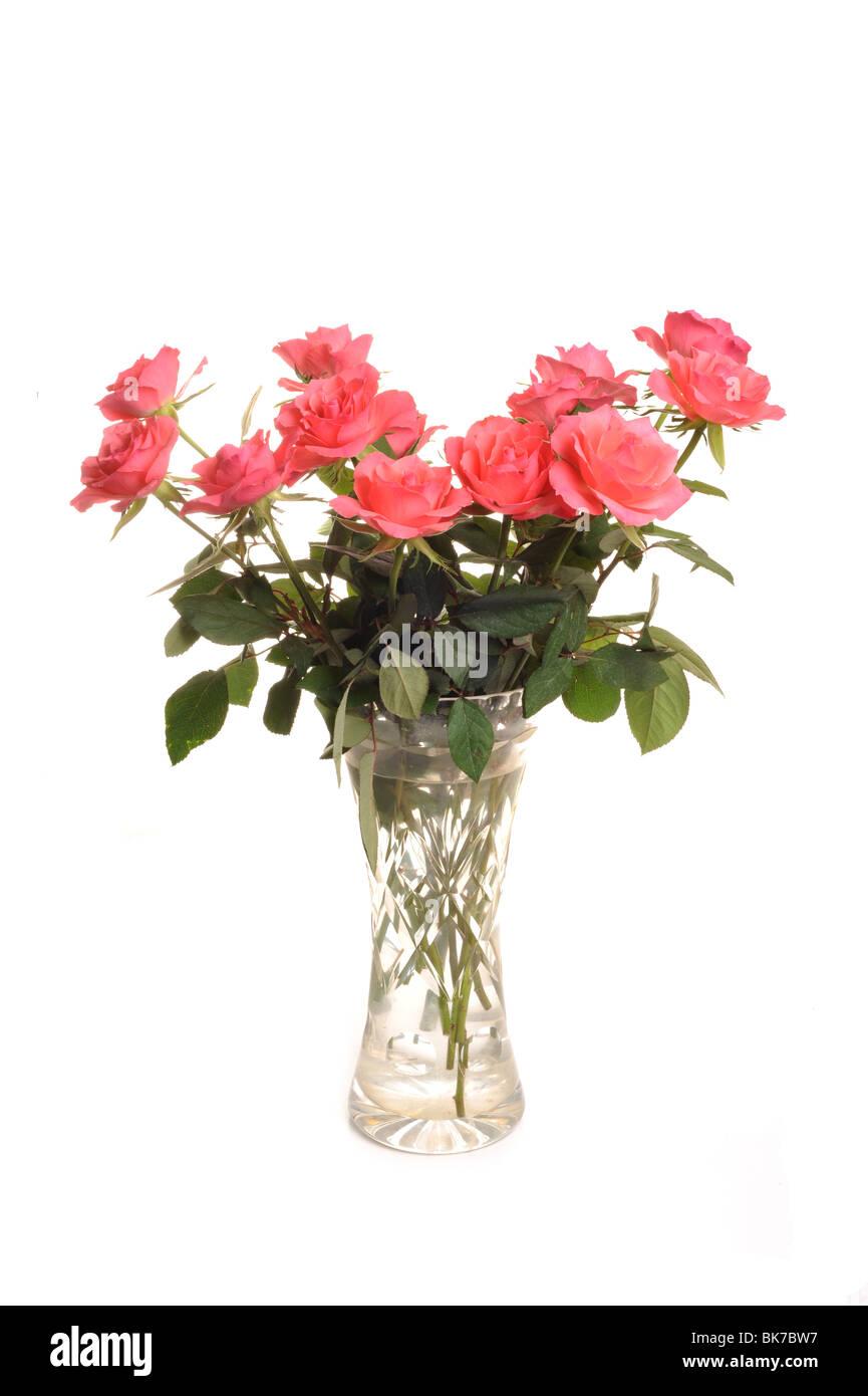Roses dans un vase photographié en studio sur un fond blanc. Photo Stock