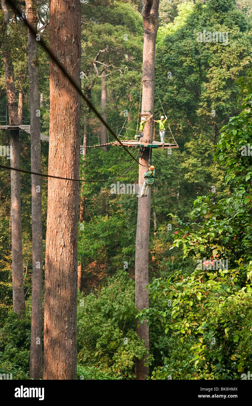 Vol jungle zip line et forest canopy tour, Chiang Mai, Thaïlande. Photo Stock