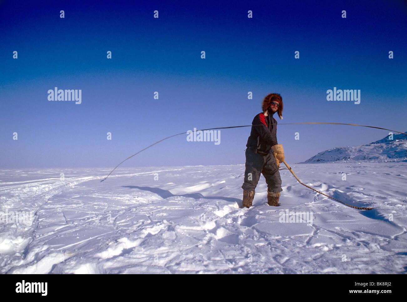 Voyageur aventure Brent Boddy pratiquant un fouet sur un traîneau à chiens expédition sur l'île de Baffin, Nunavut, Banque D'Images