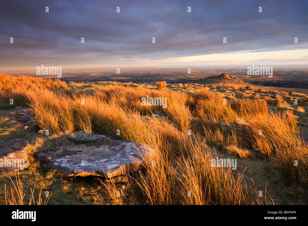 Lumière dorée sur la lande à Belstone Tor, Dartmoor National Park, Devon, Angleterre. Hiver (décembre) Photo Stock