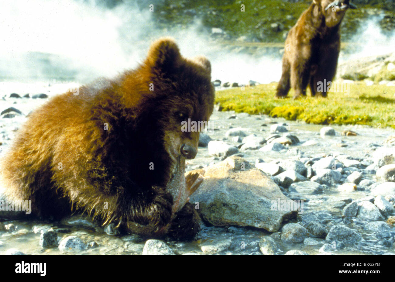 L'OURS -1989 Photo Stock