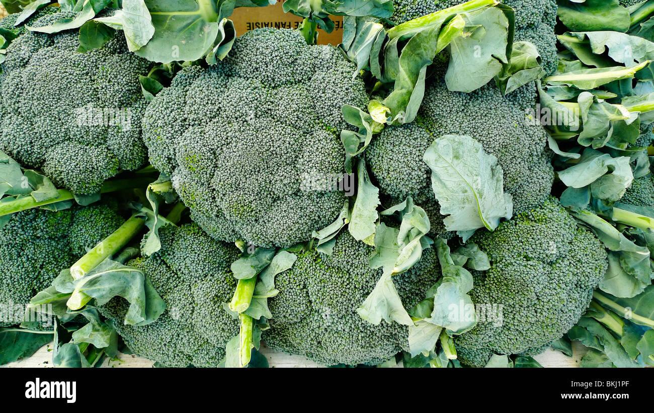 Le brocoli frais biologique sur l'affichage à un marché de producteurs. Photo Stock