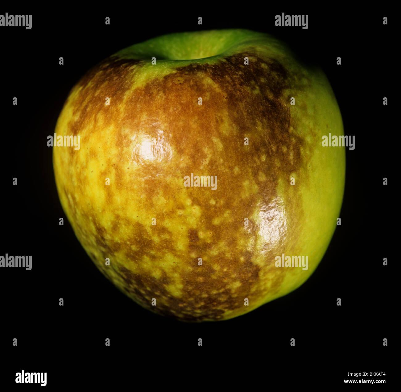Échaudure superficielle sur les blessures causées par l'apple store dans les changements physiologiques Photo Stock
