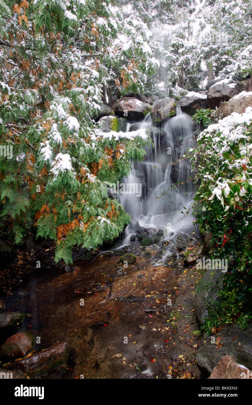 Première neige À L'Université de Minnesota Landscape Arboretum DE CHASKA, Minnesota. Photo Stock