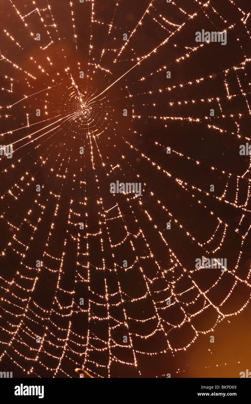 Spider web dans la région de Woods Photo Stock