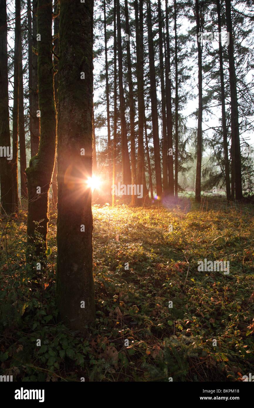 Une lumière qui brille dans l'aménagement forestier Photo Stock