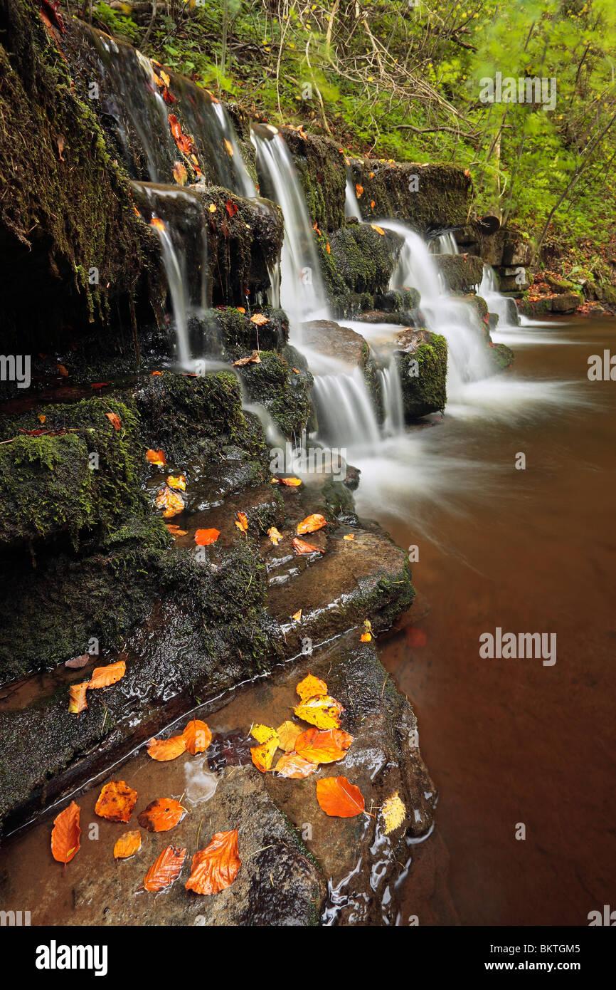 La couleur en automne à Scaleber vigueur près de s'installer dans les vallées du Yorkshire de Photo Stock