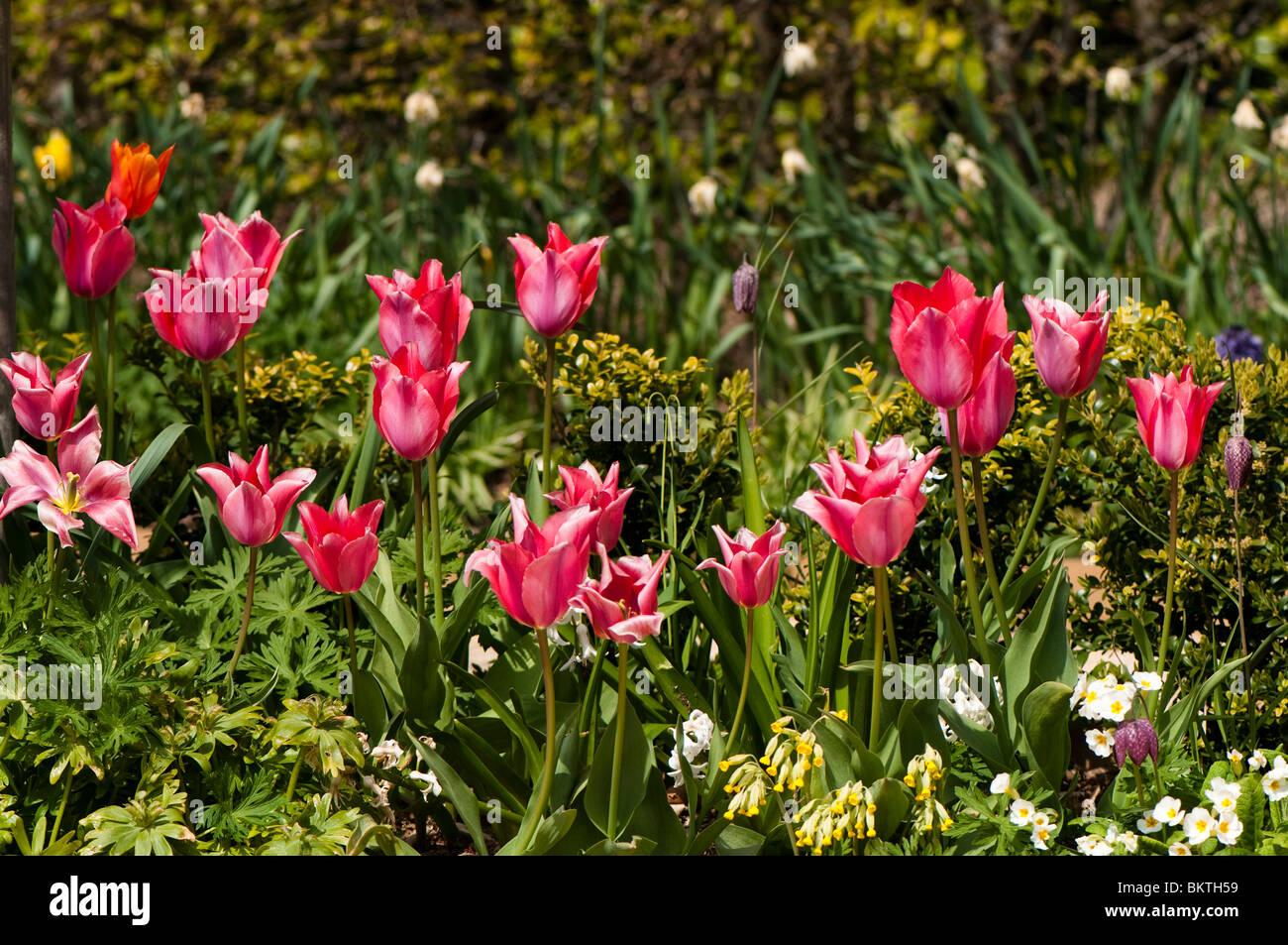 Jardin en bordure de couleur vive au printemps fleurs Banque D ...