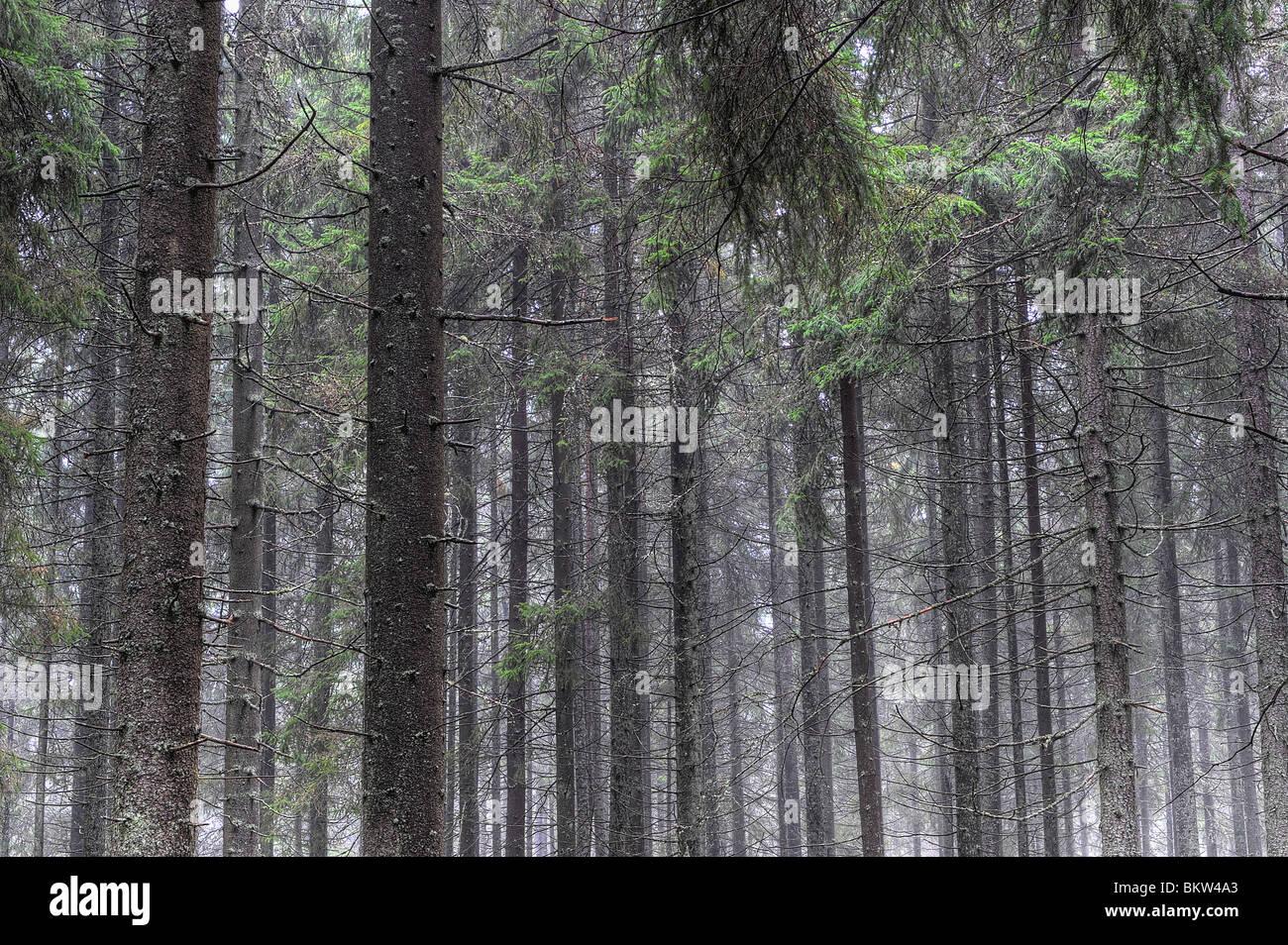 Arbres en bois Photo Stock