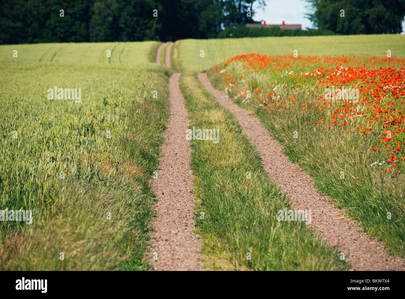 Entre les champs de la route Banque D'Images