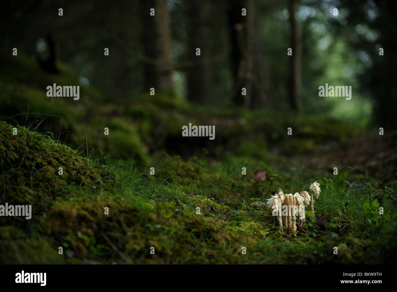Champignons dans les bois Photo Stock