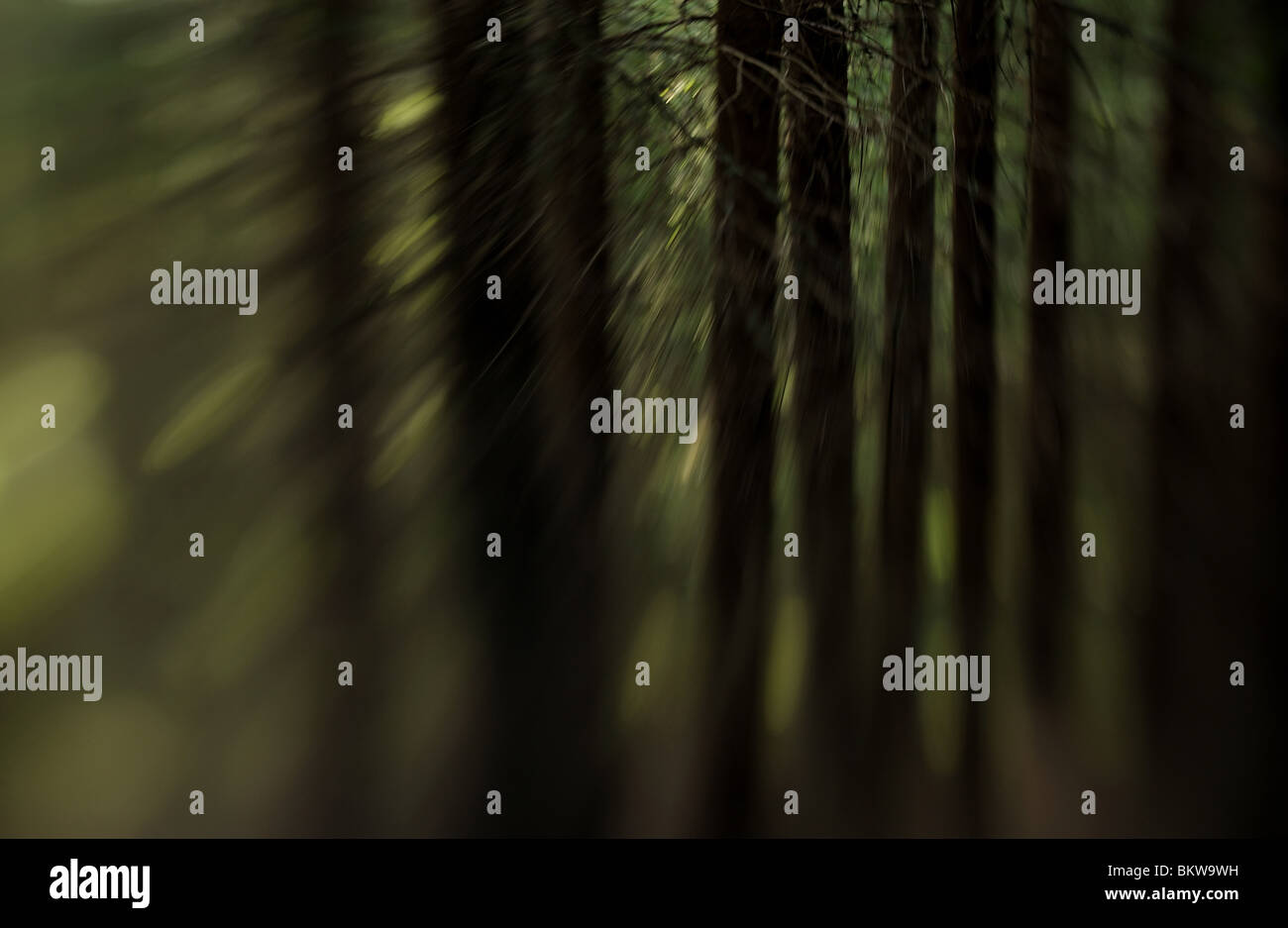 En bois Treetrunks Photo Stock