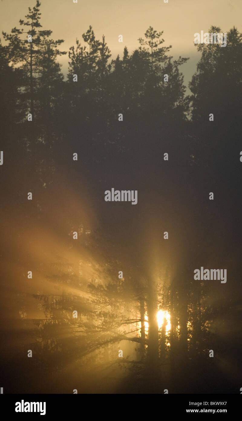 L'aube dans le bois Banque D'Images