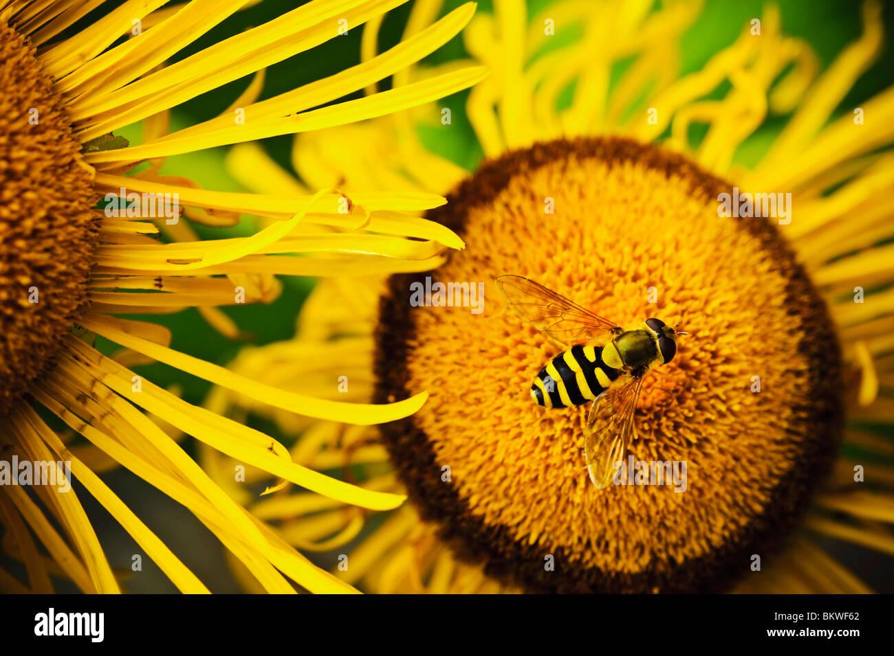Gros plan sur la fleur et fly Photo Stock
