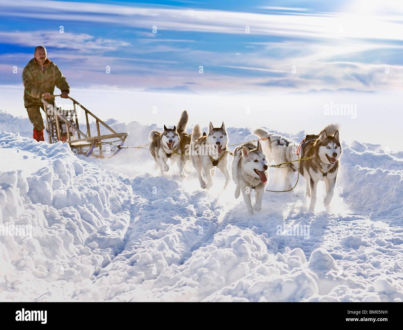 Course de chien de traîneau Photo Stock
