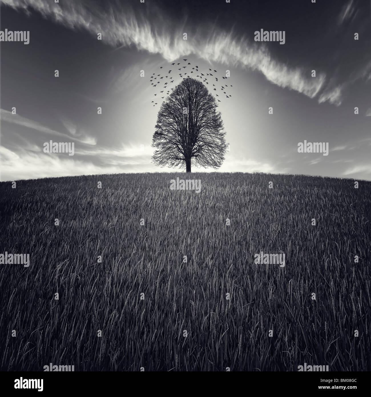 Un seul arbre dans un grand champ avec des oiseaux volant dans le ciel Photo Stock