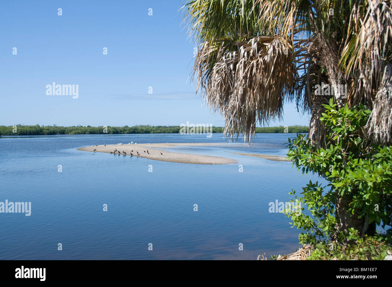 J.N. 'Ding' Darling Wildlife Reserve, Sanibel Island, la Côte du Golfe, Floride, États-Unis d'Amérique, Photo Stock