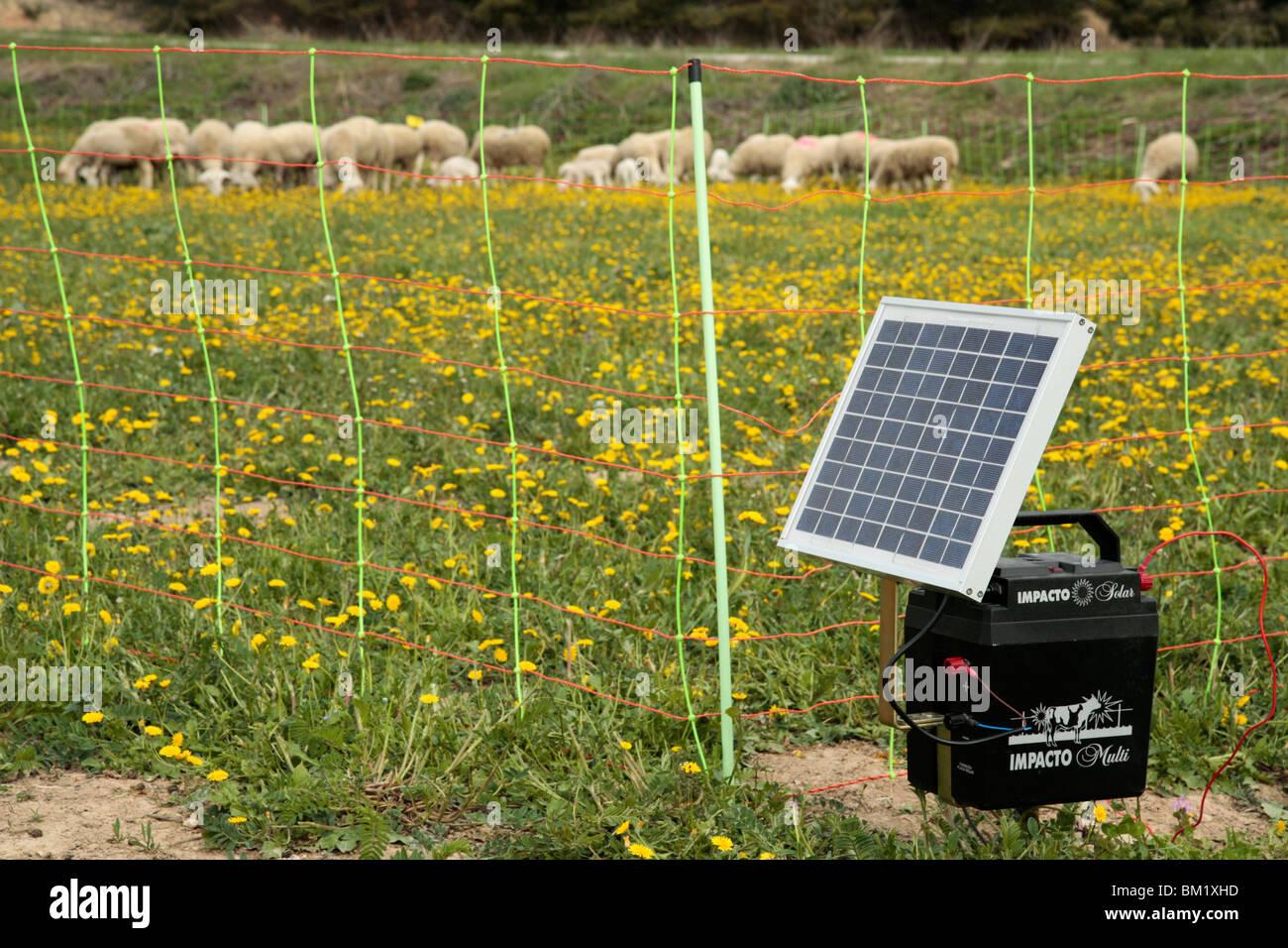 Clôture électrique et les moutons. Photo Stock
