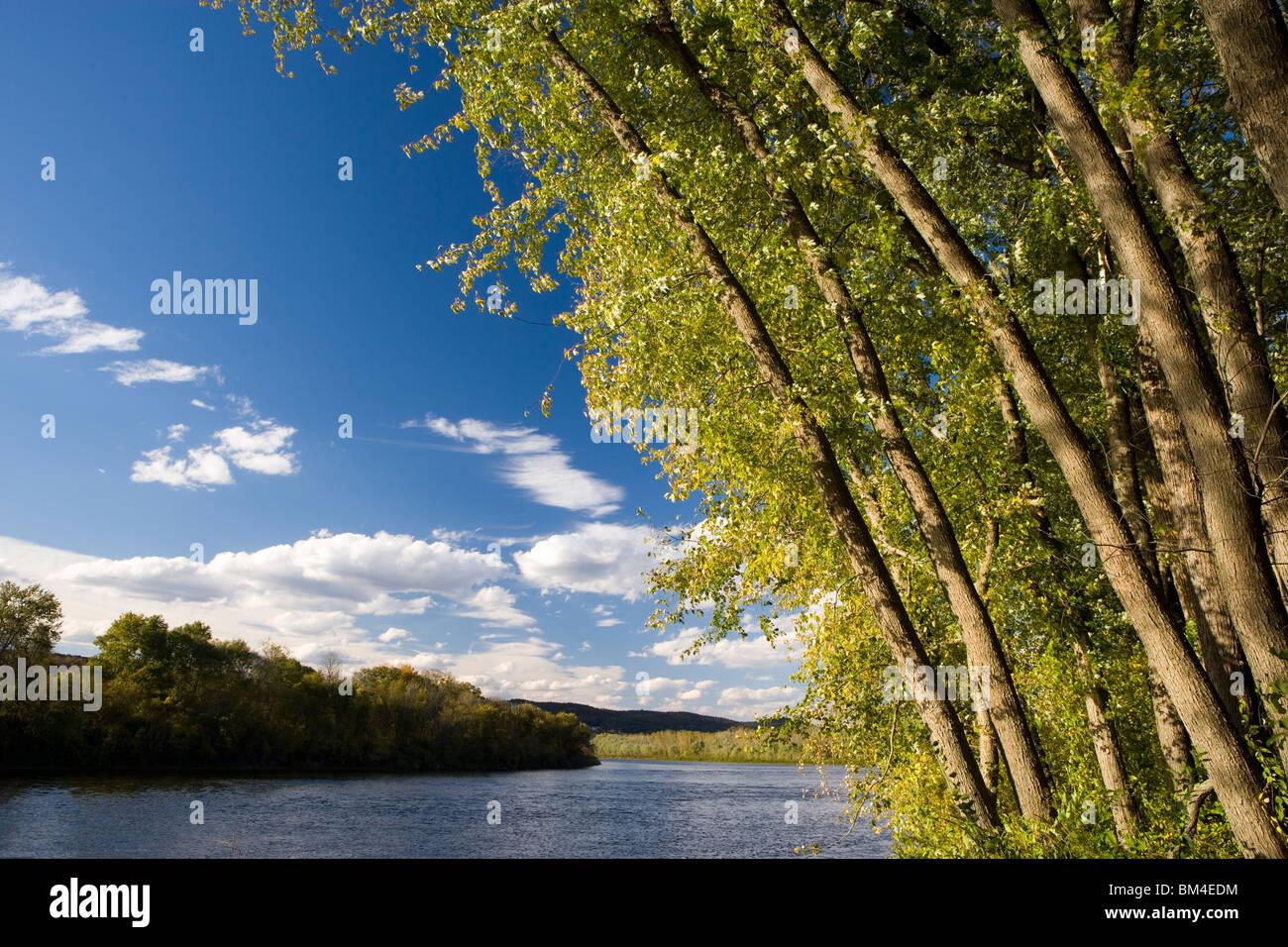L'érable argenté se pencher par-dessus la rivière Connecticut à la ferme Sawyer à Walpole, Photo Stock