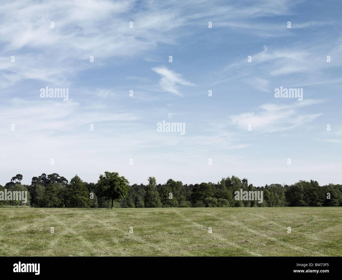 Image paysage d'un parking dans un champ, montrant les traces de pneu sur l'herbe, des arbres et un ciel Photo Stock
