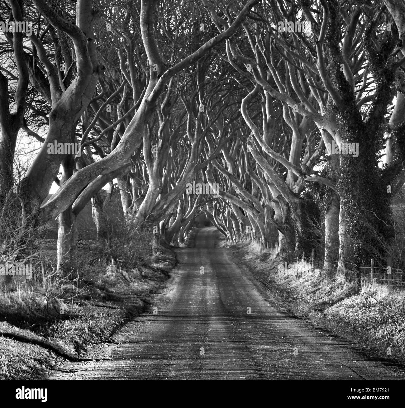 L'obscurité des haies, Armoy,. L'Irlande du Nord. Photo Stock
