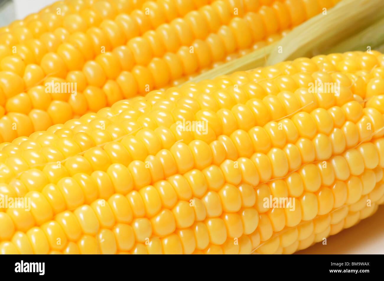 Vue rapprochée d'épis de maïs ou la texture d'arrière-plan Photo Stock