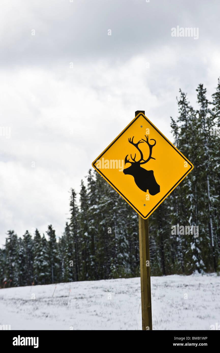 Un panneau routier de caribou sauvage d'avertissement Photo Stock