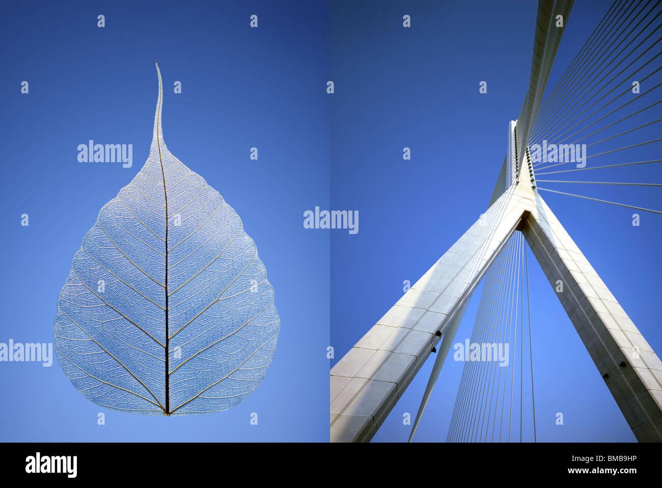 Pont suspendu au nord du Pays de Galles juxtaposés avec des feuilles squelette contre le ciel bleu Photo Stock
