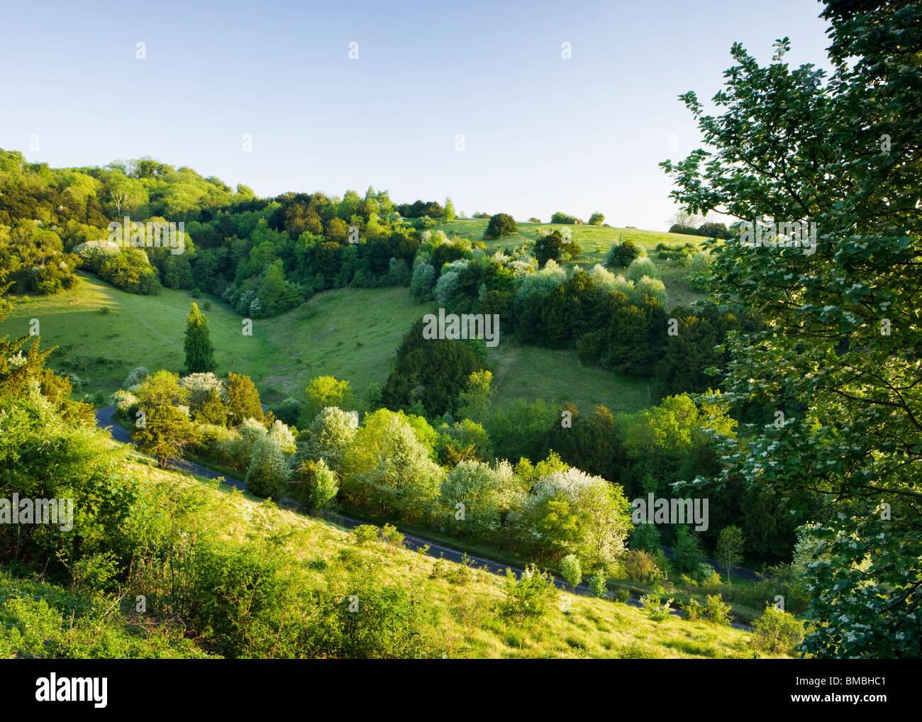 Fort Hill au zig-zag, Surrey, UK. Printemps Photo Stock