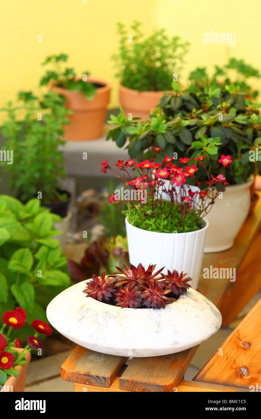 Petites fines herbes et fleurs jardin construite sur une terrasse ou un toit Photo Stock