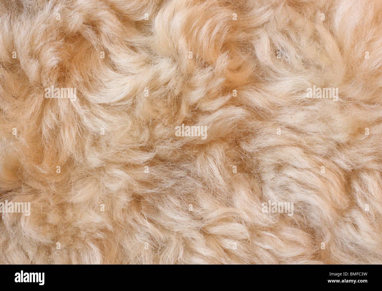 Arrière-plan de la fourrure de mouton Photo Stock
