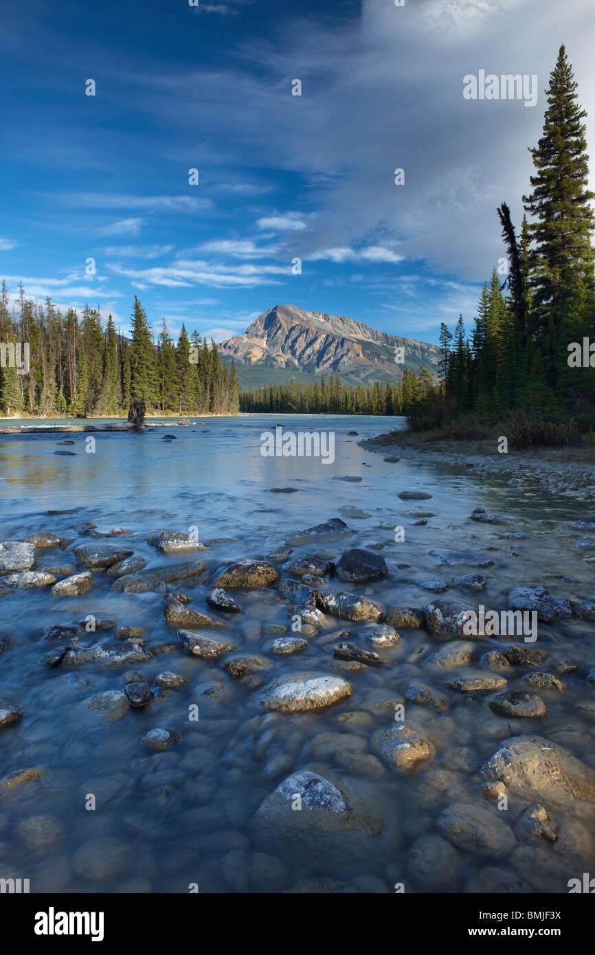 La rivière Athabasca, à la rencontre des eaux, Jasper National Park, Alberta, Canada Photo Stock