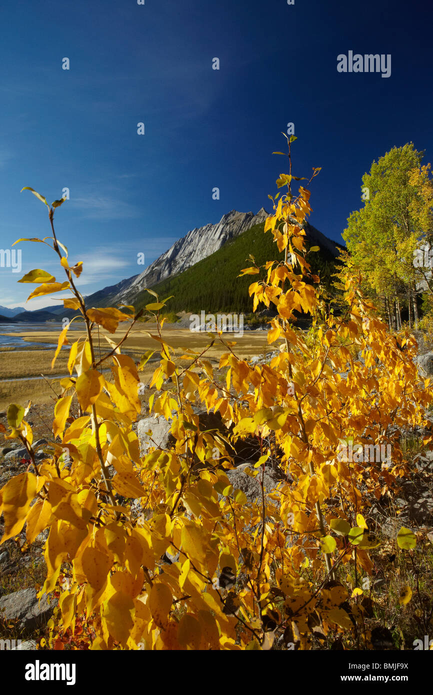 Couleurs d'automne, Beaver Creek, région de la vallée de la Maligne, Jasper National Park, Alberta, Photo Stock